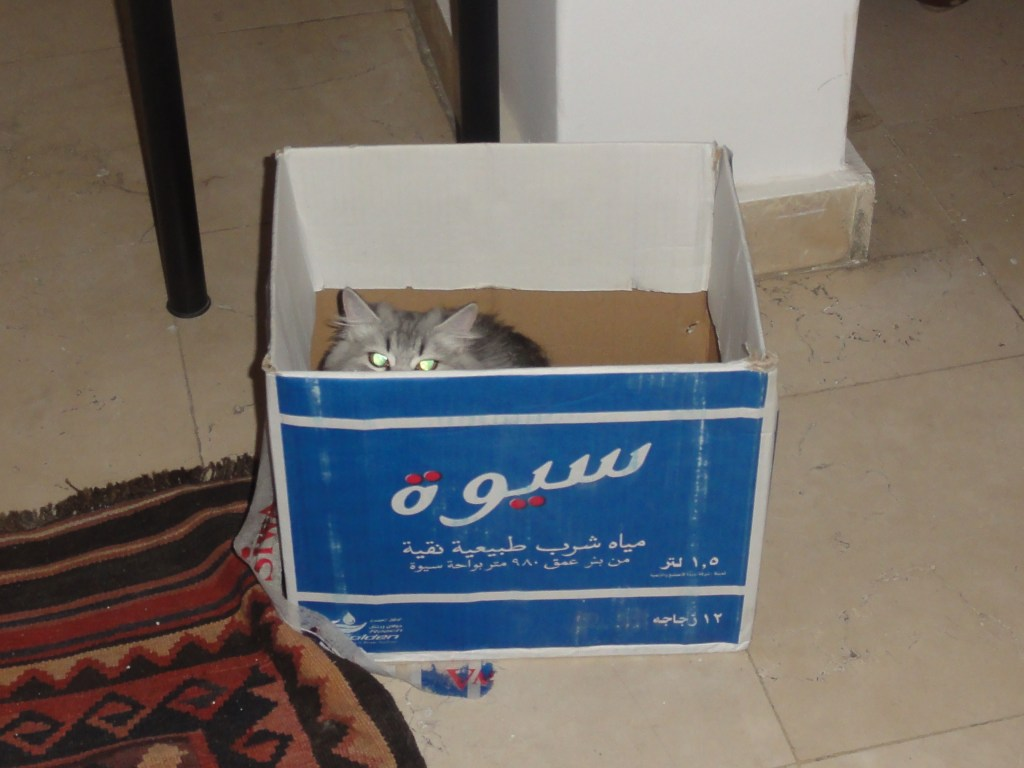 Klaus in a box WordPress won't let me upload the cute videos I have : (