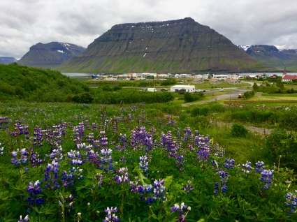 Flateyri, wildflowers.